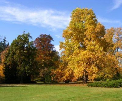 podzim v zámeckém parku